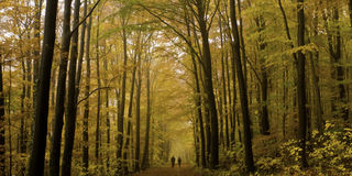 Walk in the woods Royalty Free Stock Photos