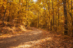 Walk in the Woods Stock Photography