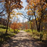 Walk in the woods Royalty Free Stock Photography