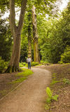 Walk through the woods at Nostell Priory, Wakefiled Royalty Free Stock Images