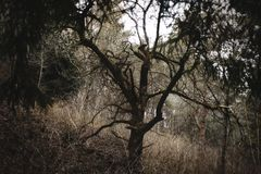 Dry tree in the dark stock photography