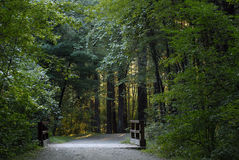 A walk in the woods. Quiet carriage road through the woods at Borderland State Park stock photo