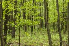 Walk through the woods Stock Photo