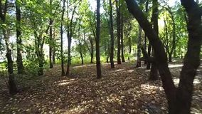 Walk in the woods stock video footage