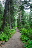 A Walk in the Woods 3. The Winner Creek Trail starts with a walk through a deep, dark, spruce rainforest Royalty Free Stock Images