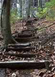 A walk through the woods. In the winter time. Up to the wooden stairs royalty free stock photos