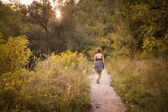 Walk in the woods Stock Image