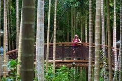 Walk in the Yalong Bay Tropic Paradise Forest Park, Hainan, Chin Royalty Free Stock Photos
