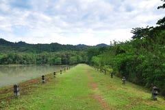 Walkaway no pântano Imagem de Stock Royalty Free