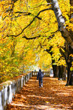 Walker in autumn park Stock Photo