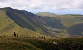 Walker on Cadair Idris, Wales Stock Photo