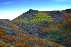Walker Canyon. Lake Elsinore Super Bloom Poppies 2019. The arial view of the mountains of Lake Elsinore, CA featuring the Super Bloom of California Poppies and royalty free stock image