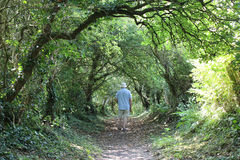 Walker on footpath framed by trees on summer day. Man in shorts walking along a footpath framed by an avenue of trees royalty free stock photos