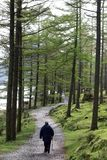 Walker on footpath through trees by Buttermere Royalty Free Stock Image