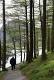 Walker on footpath through trees by Buttermere Stock Image