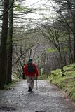 Walker on footpath through trees by Buttermere Royalty Free Stock Images