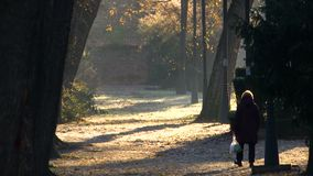 Walker in the park on a sunny autumn day. With white bag in his hand stock video footage