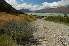 Walker on track to lake Ohau Stock Image