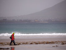 Walkers at Beal Bán Beach, Dingle, Ireland. Two walkers hike along the beach of Beal Bán on a rainy and windy day Royalty Free Stock Image