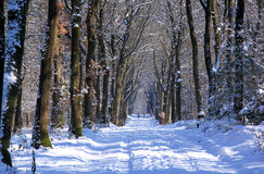 Walkers in dutch snowy woods, Loenermark Stock Image