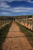 Walkers on the North Yorkshire Coastal Path royalty free stock photo