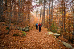 Walkers on path of golden autumn leaves in a forest in Corsica Royalty Free Stock Image