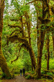 Walkers into the path of Rain forest stock images