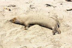 walki lwów oceanu morza fala Zdjęcie Royalty Free