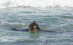 walki lwów oceanu morza fala Zdjęcia Royalty Free