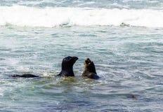 walki lwów oceanu morza fala Fotografia Royalty Free