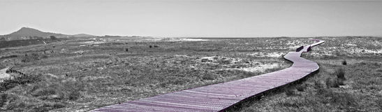 Walkin over the dune. Black and White composition of beach landscape with wooden walk over dune Stock Images
