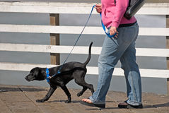 Walkin' the Pup. An overweight woman walks her young black puppy on the pier Royalty Free Stock Images