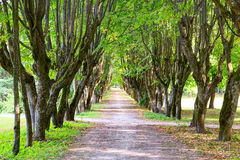 Free Walking Alley Between Green Trees Royalty Free Stock Photos - 93169388