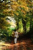 Walking alone in the forest. Autumn view of a woman taking a walk in a beautiful forest Royalty Free Stock Photography