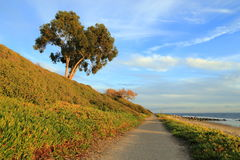 Walking along the beach. A peaceful and lonesome walking path along California coast near Santa Barbara Stock Photos