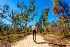 Walking along a bush trail in Australia royalty free stock photo