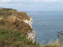 Walking along the the coastal path from bempton cliffs to filey. Royalty Free Stock Photos