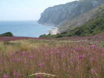 Walking along the the coastal path from bempton cliffs to filey. Stock Photography