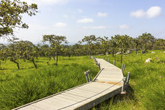 Walking along the flower field in summer. Path in the flowers field, national park, Thailand Royalty Free Stock Image