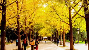 Walking along the parkway in Autumn, Beijing stock footage
