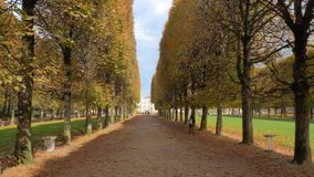 Autumn scene of tree lined promenade in Luxembourg Gardens, Paris. Walking along the promenade in Luxembourg Gardens. Autumn scene with high yellow wayside trees stock footage