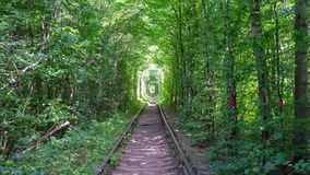 Walking along the Tunnel of Love. The walk along the Tunnel of Love, the part of the railway with unique arched shape of trees and bushes around it, created by stock video