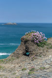 Walking around the coast path to stepper point cornwall uk Royalty Free Stock Photos
