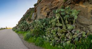 Walking around Morro Rock, Morro Bay, California royalty free stock photo
