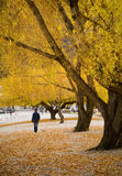Walking in Autumn Royalty Free Stock Image