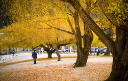 Walking in Autumn Stock Photography