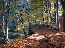 Walking in autumn. Autumn wood along a little river stock image
