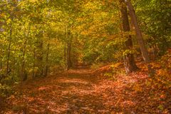 Walking Autumn Royalty Free Stock Photography