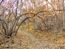 Autumn Fall forest views hiking through trees on the Rose Canyon Yellow Fork and Big Rock Trail in Oquirrh Mountains on the Wasatc. Walking through Autumn Fall stock photography