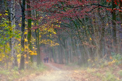Walking Through The Autumn Fog. Walking through the autumn colors and fog royalty free stock photos
